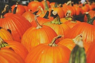 unsplash pumpkins