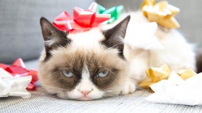 Holiday spirit_grumpy cat