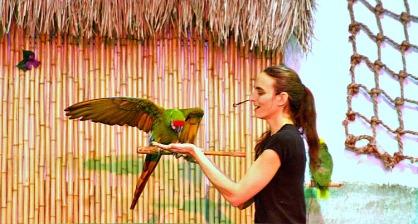 Dancing Horses - bird show