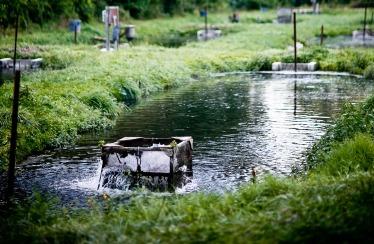 trout-farm-07.jpg